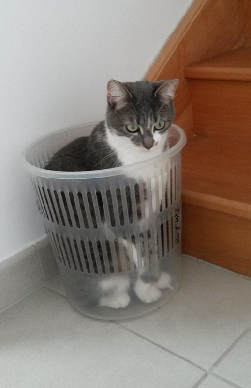 Chat dans une corbeille à papier
