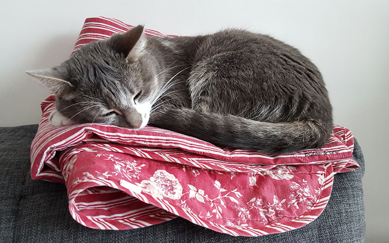 Chat qui dort sur une couverture