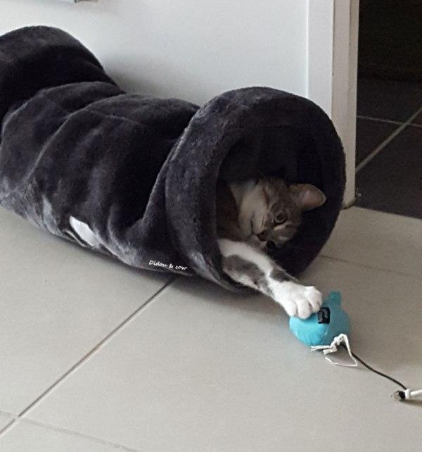 Chat qui jour avec une souris dans un tunnel