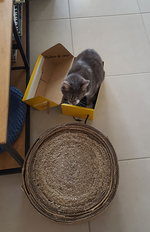 Chat dans une boite à chaussures