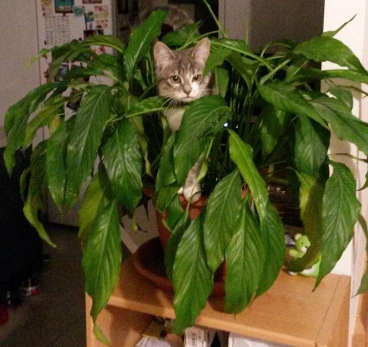 Chat dans une plante verte